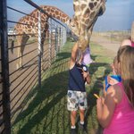 Feeding Giraffes on evening tour