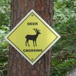 Deer come to feed daily
