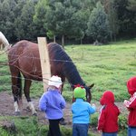 The kids out feeding the horses.