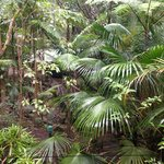 Amazing Wollumbin Palms Retreat at Mt Warning resmi