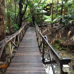 صورة فوتوغرافية لـ ‪Amazing Wollumbin Palms Retreat at Mt Warning‬