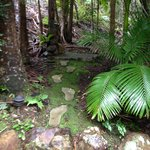 Foto van Amazing Wollumbin Palms Retreat at Mt Warning