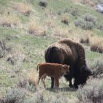 Greater Yellowstone Guides