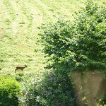You can see wild Roe deer from your room!