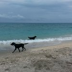 Jupiter Dog Beach