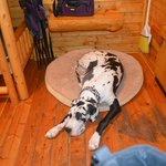 Room for even a Great Danes dog bed