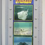 Stingray Identification