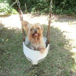 DJ  Now 13 years young on the swing at the Cape Pines July 21 2013