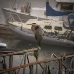 a blue heron on the ramp to the dock