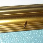 roach on picture above bed