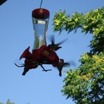 Hummingbirds on the veranda
