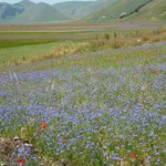 Lentil fields near Castelluccio