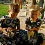 The boys playing with the kittens.