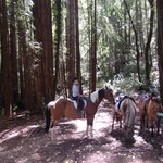 Taking a Break During a Ride in the Redwoods