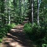 The trail from the campground to the Flathead River.