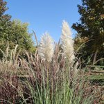 Plumes on the grasses