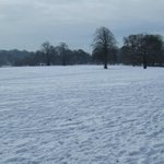 winters day in witton park.