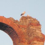 Storks nesting on bridge remains