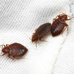 ROOM 102 has plenty of these welcoming guests....BEDBUGS