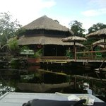 Amazon Lodge- AM