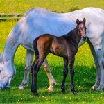 mare and 5 day old foal