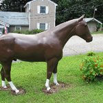 Since I moved to NH in 1987, I've seen this horse in their yard. I love him! :)