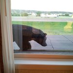 The bear statue outside our room (on the second floor)