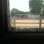 Mouldy Window - Linford Stables