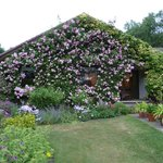 House at rose time.