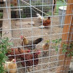 The B&B's chicken coop.