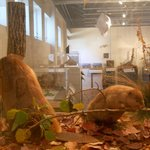 Many taxidermy exhibits on display!