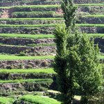 terraces of agriculture