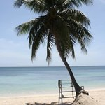 Foto de Coconut Tree II
