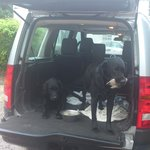 Scrumpy & Jack (Mystery shopper dogs !!)