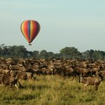Hot Air Balloon over the wildebeest migration