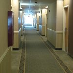 Billede af Holiday Inn Hotel and Suites Savannah-Pooler