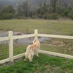 Fenced dog area