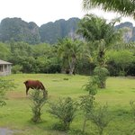 Foto de NS Railay Mountain Villas