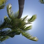 Under a palm for shade