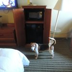 Foto van La Quinta Inn & Suites Beaumont West