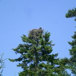 Bird nesting in a treetop