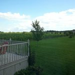 Foto van Among the Vines B&B