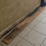 Mold inside the baseboard outside the elevator