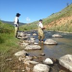 Fly fishing on Taylor Creek