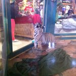 Foto di Kalahari Resorts & Conventions