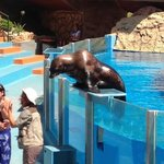The sealion show.