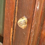 Snail on the door.