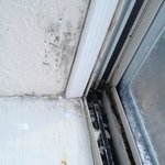 black mold covering inside of window, on the wood, glass and metal hardware