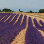 Drive to Valensole for the Lavender