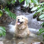 Monte the dog cooling off on a hike